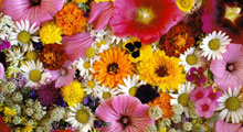 Магазины цветов
